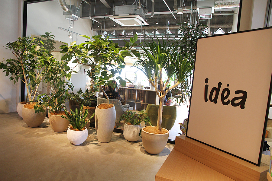 idea 柏の葉T-SITE店
